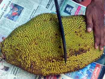 Jackfruit Cutting Steps